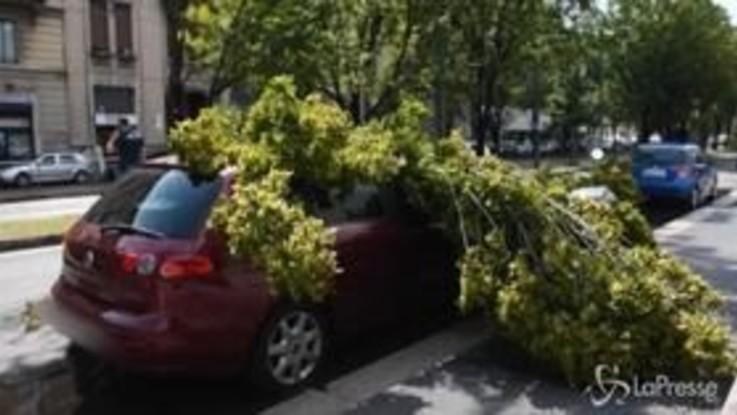 Violento nubifragio a Milano: alberi e piante sradicati dal vento e dalla pioggia