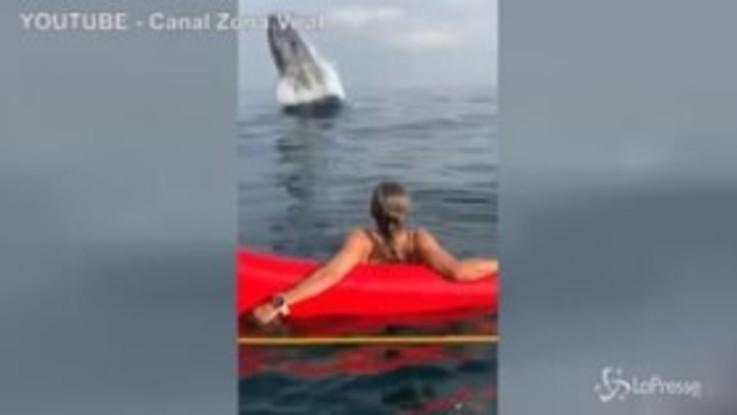 L'enorme balena salta a pochi metri dai bagnanti