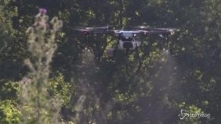 Lussembrugo, l'idea di una viticoltrice: usare il drone per spargere fertilizzante