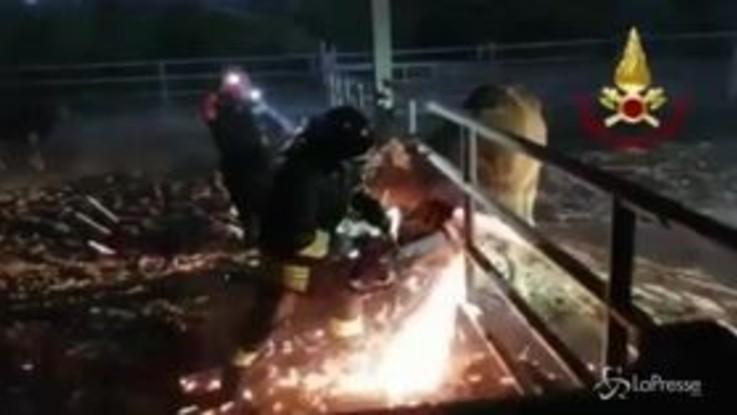 Sassari, toro bloccato nel recinto: salvato dai vigili del fuoco