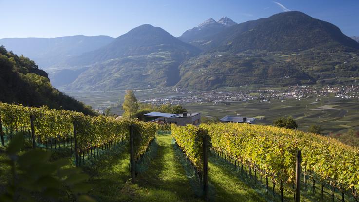 Dal wine tour ai segreti antichi della vendemmia: tante idee per una vacanza nel mondo del vino