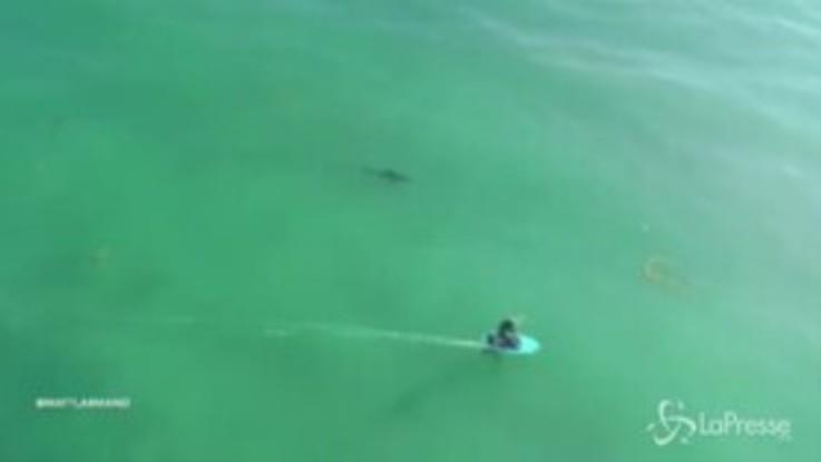 VIRAL PRESSE - Surf da brivido, sotto la tavola nuotano grossi squali bianchi
