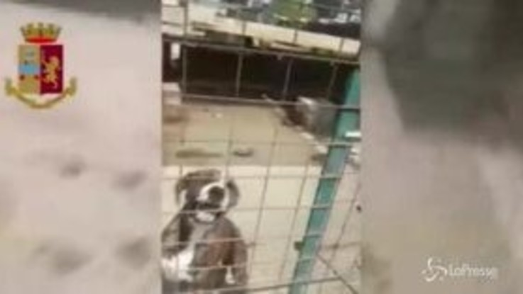 Catania, canile illegale con animali trascurati