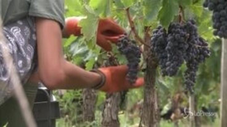 Cina-Usa, nella guerra dei dazi vince il vino made in Italy