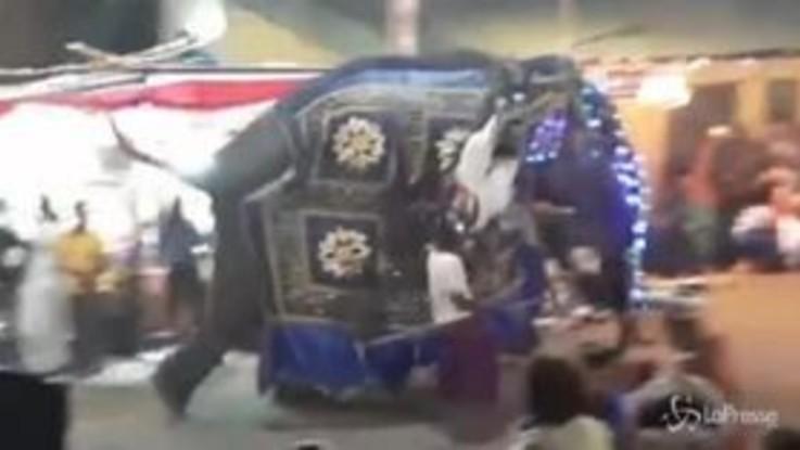 Sri Lanka: elefanti travolgono folla durante una festa: almeno 17 feriti