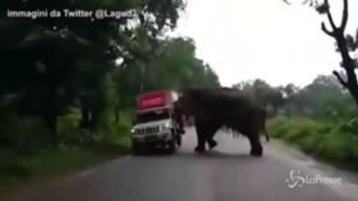L'elefante ribalta il furgoncino con la proboscide