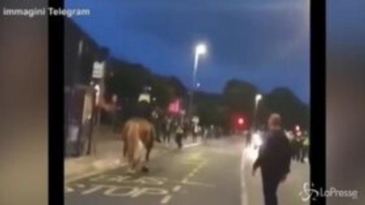 VIRALPRESSE Tira un pugno a un cavallo della polizia, arrestato fan del Portsmouth