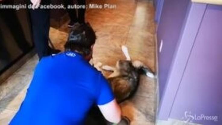 Rivede il cane dopo 4 anni: l'incontro è commovente