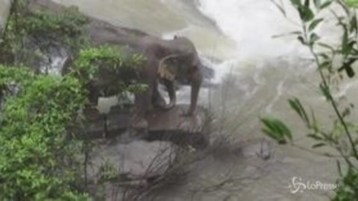 Cucciolo di elefante annega in una cascata, altri cinque muoiono nel tentativo di salvarlo