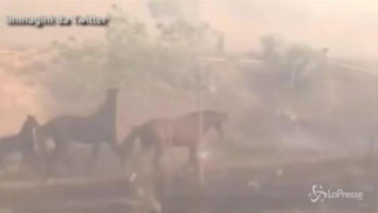 California, il cavallo eroe torna nella stalla in fiamme per salvare la famiglia