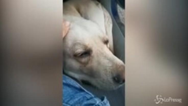 Cosenza, Labrador veglia la tomba del proprietario per 10 giorni