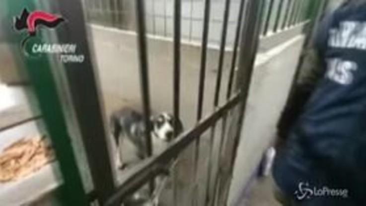 Oltre 30 cani rinchiusi in locali fatiscenti, tra escrementi e rifiuti: sequestrato canile a Torino
