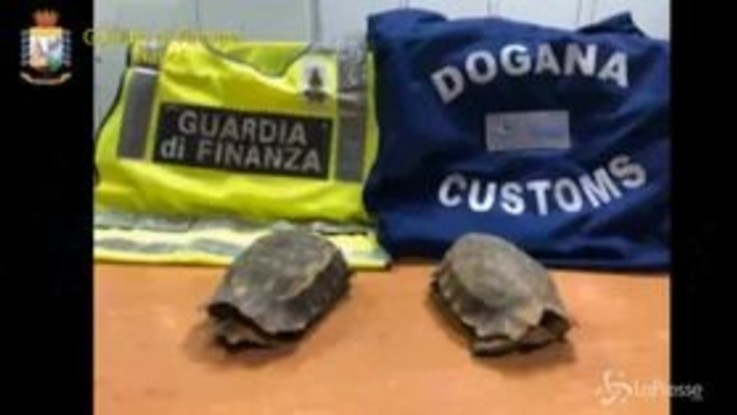 Napoli, tartarughe a rischio estinzione sequestrate all'aeroporto