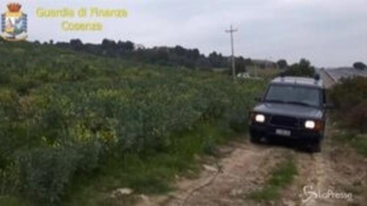 Falso olio biologico, arrestato ex consigliere regionale della Calabria