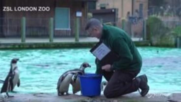 Lo zoo di Londra chiuso per inventario: censiti oltre 20mila animali