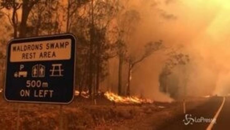 Australia in fiamme, allarme WWF: 8000 koala dispersi