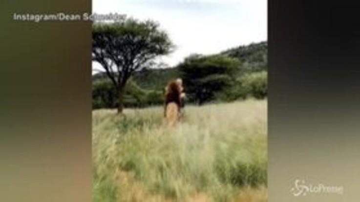 Quando giochi a nascondino con un leone (E lui ti trova)