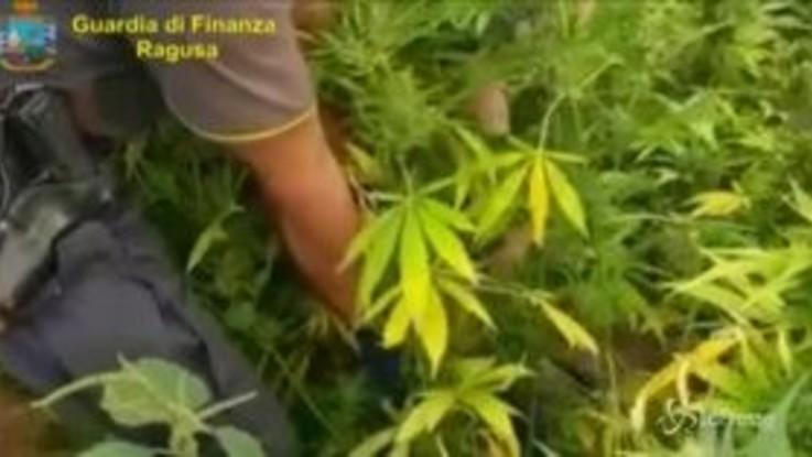 Ragusa: sequestrata piantagione di marijuana da 7mila piante