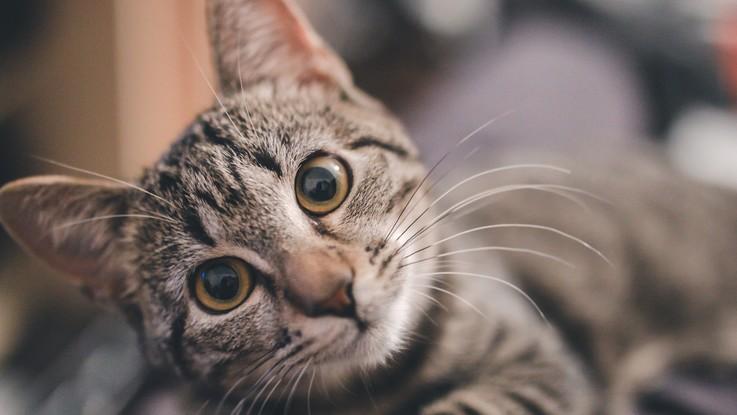 Festa Nazionale del Gatto: l'Enpa festeggia con un'iniziativa
