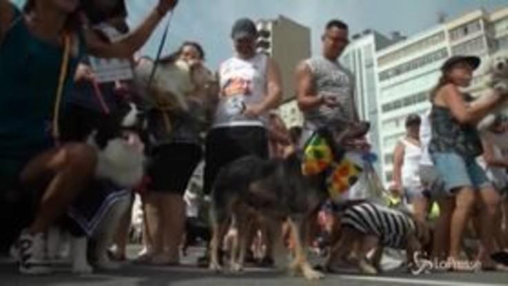 Brasile, a Rio è carnevale anche per gli amici a quattro zampe