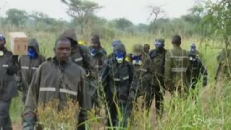 Uganda, i soldati contro l'invasione delle locuste del deserto