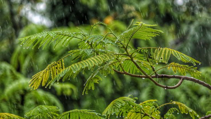 Il meteo per il 28 e 29 febbraio: arriva la pioggia