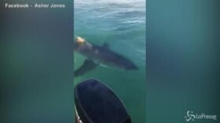 Nuova Zelanda, incontro ravvicinato con un terribile squalo bianco