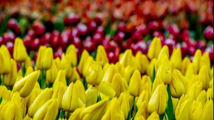 Coronavirus: la vendita di fiori, piante e semi è consentita su tutto territorio nazionale