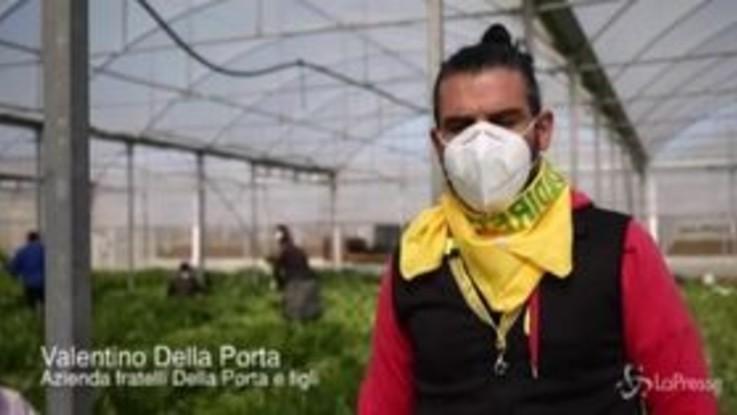 """Coronavirus, aziende agricole in difficoltà: """"Mancano i lavoratori stagionali"""""""