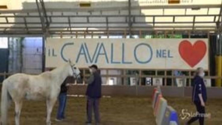 Coronavirus, terapia con i cavalli in ospedale per alleviare lo stress di medici e infermieri