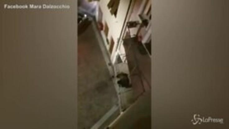 Un orso sale su un balcone in Trentino