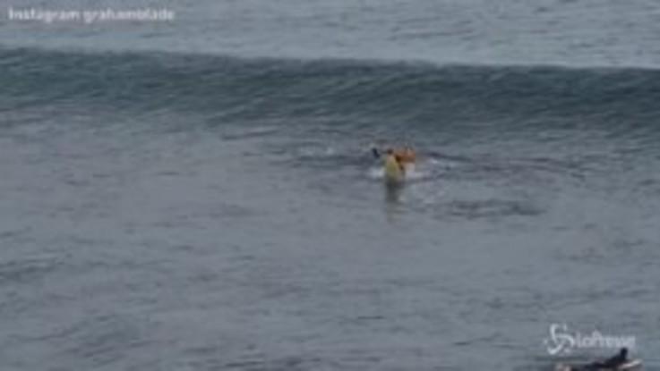 Australia, surfista morso da uno squalo: le immagini dell'attacco