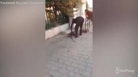 Uccide un gatto e lo cucina in strada. Indignazione a Campiglia
