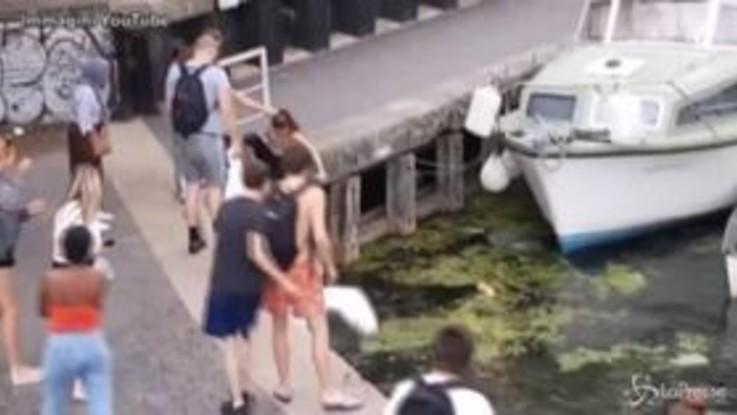 Londra, ragazza tira calci a un cigno: un uomo interviene e viene spinto in acqua