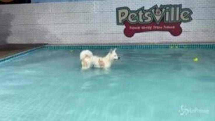 Dubai, ecco il parco acquatico per cani