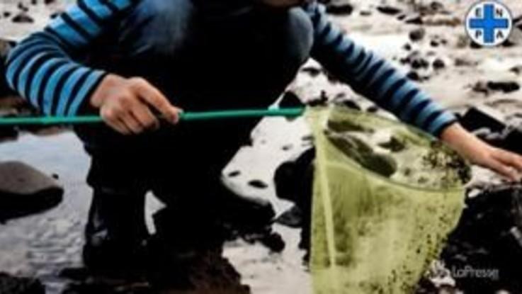 Enpa: i 6 buoni motivi per dire basta ai giochi con gli animali marini