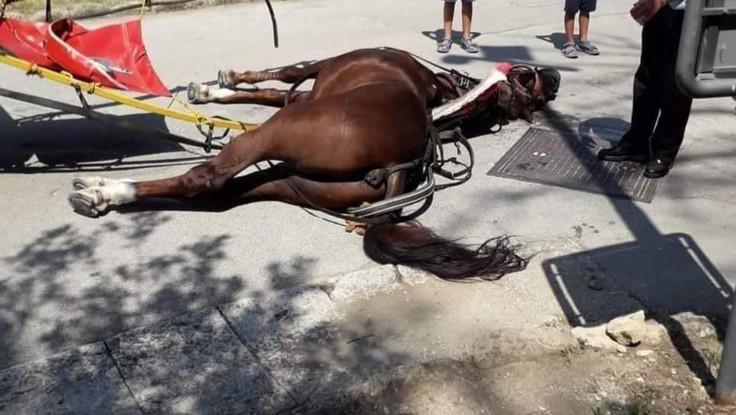 Caserta, alla Reggia muore cavallo di una botticella