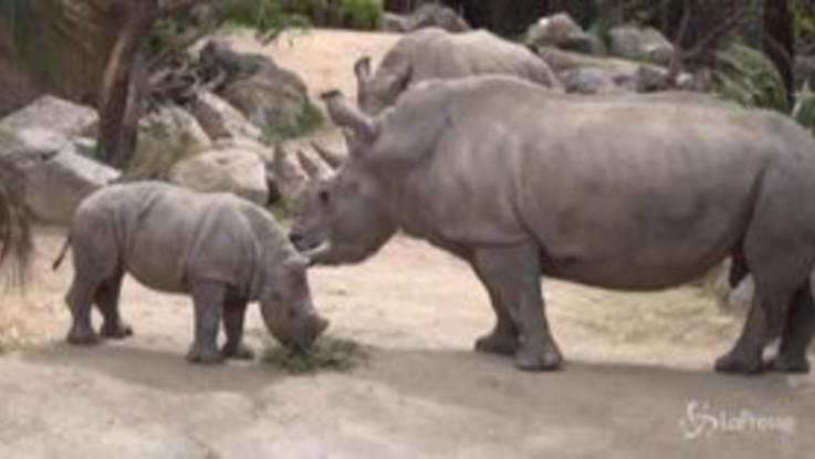 Cile: lo Zoo di Buin riapre in sicurezza dopo il lockdown