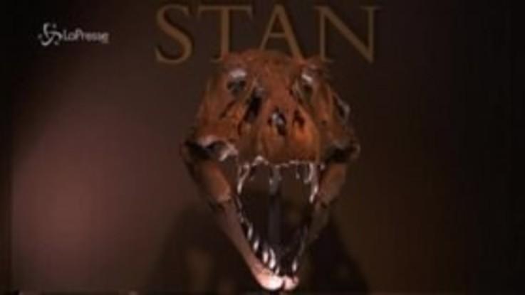 Stan, lo scheletro di T-Rex all'asta per 8 milioni di dollari