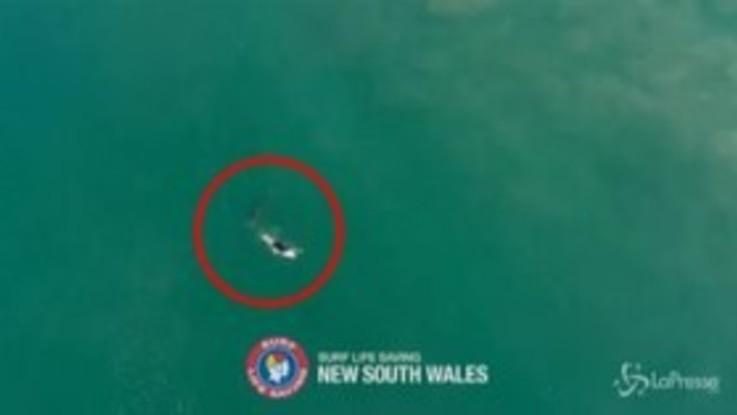 Australia, incontro ravvicinato tra surfista e squalo bianco