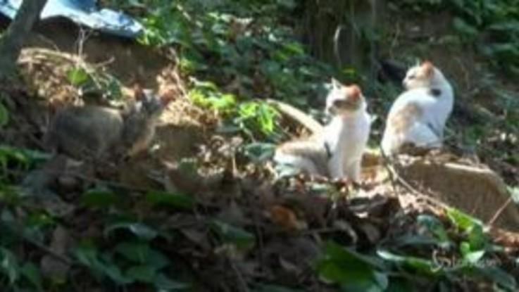 Brasile, 'Isola dei Gatti' abbandonata per la pandemia: i felini muoiono di fame