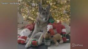 Usa, gli auguri di Natale dai cani presidenziali