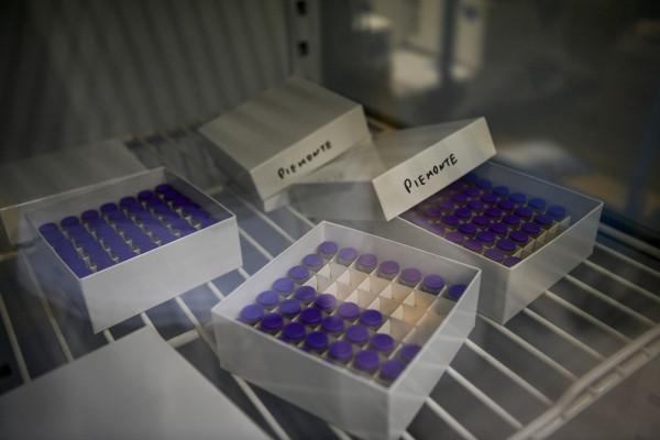 Coronavirus, in Italia vaccinate 14.334 persone