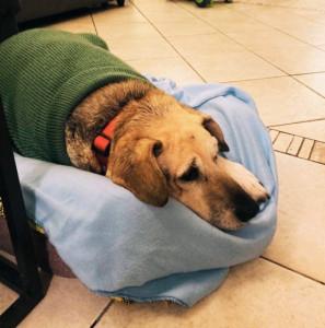 Boom di adozioni di cani e gatti durante il lockdown, il 15% in più rispetto allo scorso anno