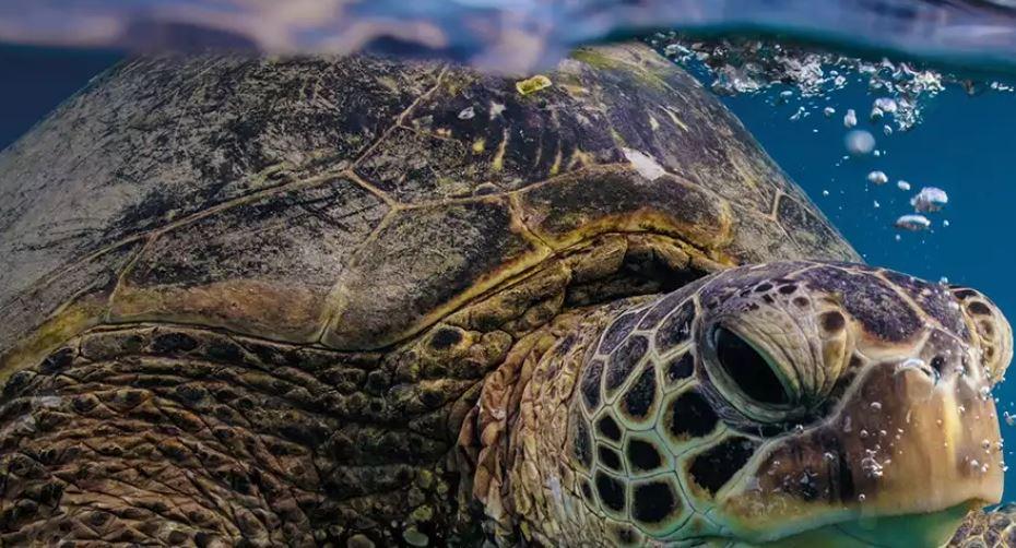 Tartarughe salvate dai pescatori. Liberate a San Valentino