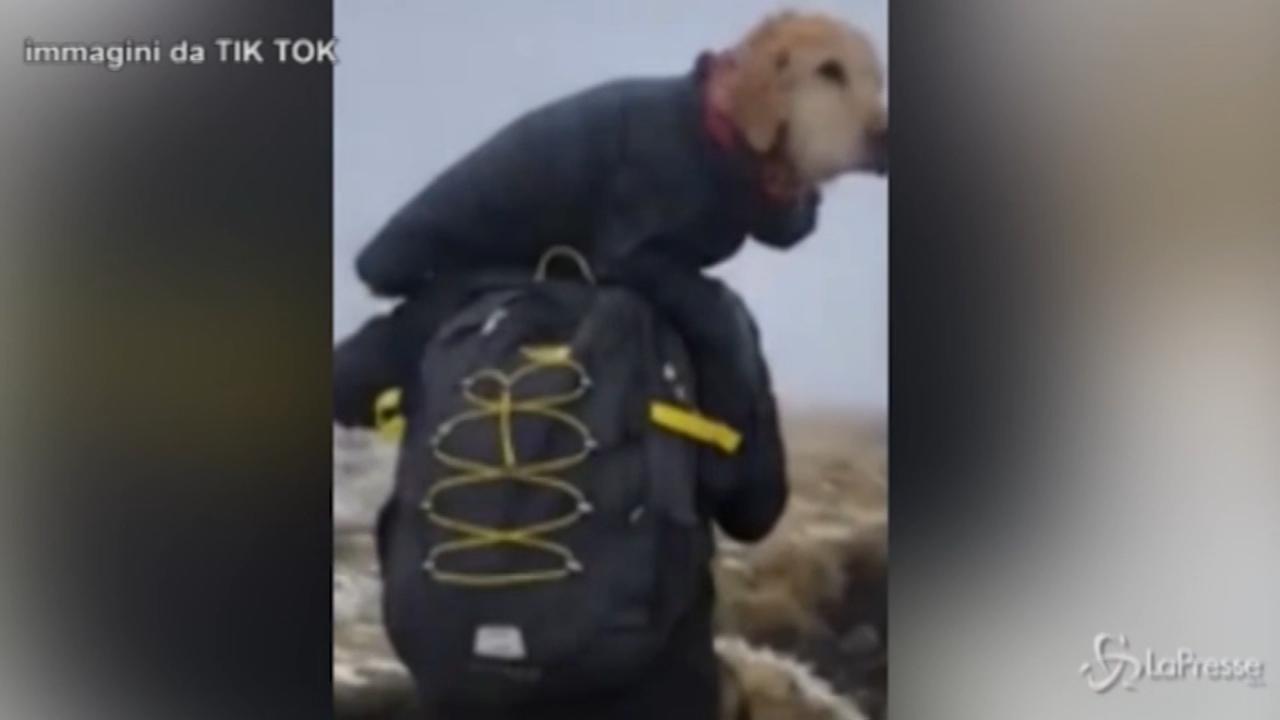 Irlanda, salvano cane disperso in montagna e lo trasportano a valle