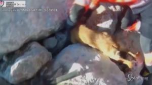 Cane intrappolato tra le rocce liberato dai vigili del fuoco