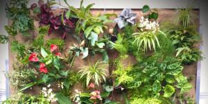 Parete Viva il giardino in casa