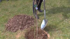 Primo albero del Bosco della Memoria