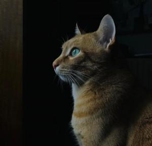 Covid variante gatto